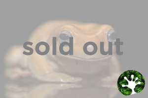 Stock Images_soldout_honey